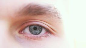 关闭一只灰色男性眼睛 一个人的一只灰色眼睛的细节看照相机的 图库摄影