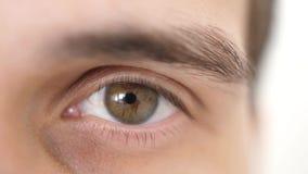 关闭一只男性眼睛 详述张开看在白色背景的一个人的一只棕色眼睛照相机 3840x2160 股票录像