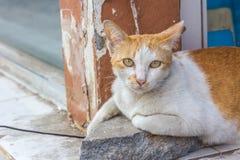 关闭一只红色猫的画象与黄绿色眼睛的 免版税库存图片