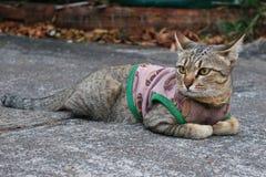 关闭一只逗人喜爱的猫的图象 库存照片