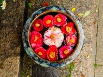 关闭一套cattleya兰花红色花和石头作为在扔石头的地面的供奉在日本 免版税库存照片