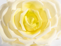 关闭一朵白色和黄色玫瑰的细节 库存图片