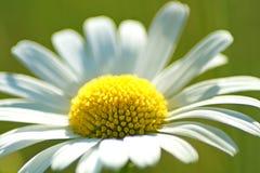 关闭一朵美丽的花 库存图片