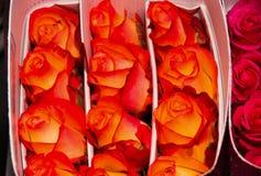 关闭一束美丽数十开花的桔子玫瑰色花束 库存图片