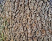 关闭一棵树的吠声在公园 库存照片