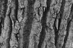 关闭一棵树的吠声在黑白的 库存照片