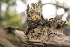 关闭一棵死的树 免版税库存照片