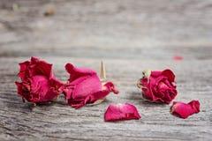 关闭三朵干燥玫瑰 库存图片