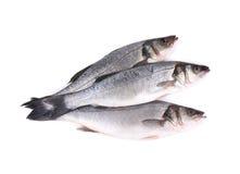 关闭三条新鲜的雪鱼鱼。 库存图片