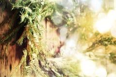 关闭与圣诞灯的选择聚焦自然花圈在木背景 免版税库存图片