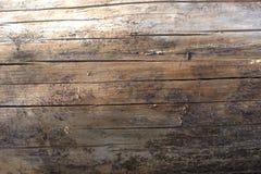 关闭与所有吠声的一本各式各样的苏格兰松树树日志去除与在木头的各种各样的轻和次贫地区 免版税库存图片
