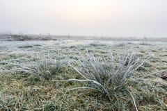 关闭与树冰的草在一个冬日 库存照片