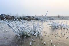 关闭与树冰的草在一个冬日 免版税图库摄影