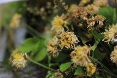 关闭与菊花的干凋枯的花花束 免版税库存图片
