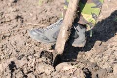 关闭与锹,准备的人开掘的春天土壤 免版税库存图片