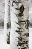 关闭与雪的树 免版税库存图片