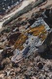 关闭与黄色青苔的石头靠近Yumthang谷在冬天在Lachung 北部锡金,印度 免版税库存图片