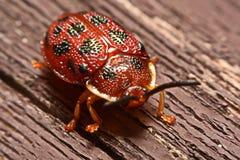 关闭五颜六色的瓢虫瓢虫科照片在木头bac的 免版税库存图片