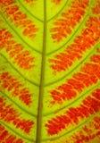 关闭五颜六色的秋叶纹理 库存图片