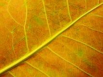 关闭五颜六色的纹理叶子颜色 库存照片