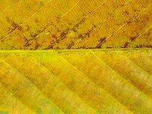 关闭五颜六色的纹理叶子颜色 免版税库存图片