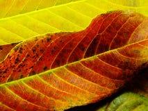 关闭五颜六色的纹理叶子颜色 免版税库存照片