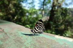 关闭五颜六色的蝴蝶 免版税库存照片