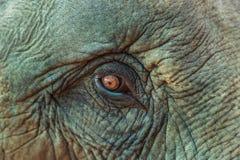 关闭亚洲大象眼睛 免版税图库摄影