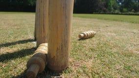 关闭从树桩取消的蟋蟀保释金 免版税库存照片