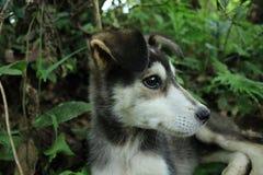 关闭从黑色的边与一只小狗的白色和逗人喜爱的头与森林的在背景中 免版税库存照片