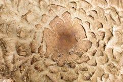 关闭伞菌的细节 免版税库存照片