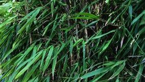 关闭低灌木,挥动一棵生长植物的风的绿色叶子的射击 股票录像
