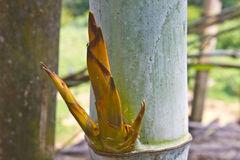关闭分支再生竹子在森林里 库存照片