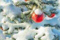 关闭分支圣诞节杉树装饰的红色球 库存图片