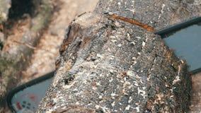 关闭切开与红色锯,锯木屑飞行的干燥树干到处 股票录像