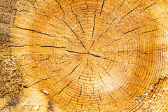 关闭剪切结构树 免版税库存图片