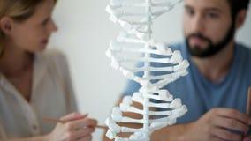关闭千福年的科学家观察的脱氧核糖核酸模型 影视素材