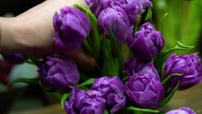 关闭卖花人在花瓶举起新鲜的紫色郁金香 股票视频