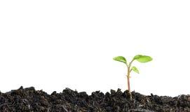 关闭发芽从在白色背景的地面的年幼植物 免版税库存照片