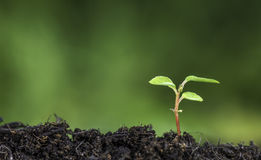 关闭发芽从地面的植物有鲜绿色bokeh背景 库存照片