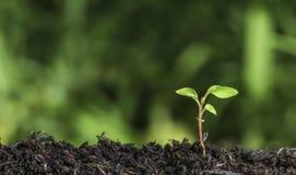 关闭发芽从地面的年幼植物有绿色bokeh背景