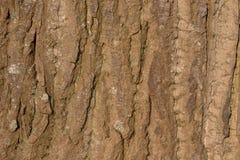 关闭取暖一棵大的树的吠声在阳光下 库存图片
