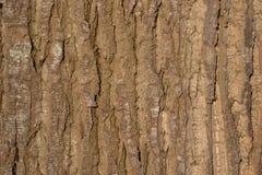 关闭取暖一棵大的树的吠声在阳光下 免版税库存照片