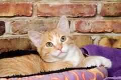 关闭可爱的橙色小猫在床上 免版税库存照片