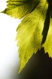 关闭叶子,一片叶子的结构在庭院里 免版税库存图片