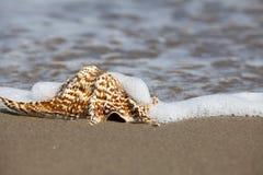 关闭唯一巧克力精炼机壳的看法在海滩的 免版税库存照片