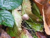 关闭唯一棕色和白色小蘑菇森林地板 免版税库存照片