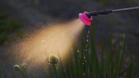 关闭喷洒在绿色植物的喷水隆头,慢动作外面的水 股票录像