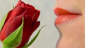 关闭嗅到一朵红色玫瑰4K 影视素材