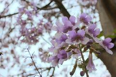 关闭图象的紫色花 免版税库存图片